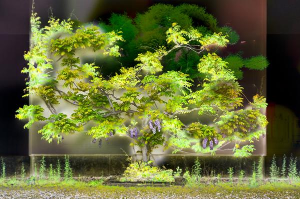 """""""Man made Tree"""" Series 2016 / Fotografie Komposition, pigmentierte Tinten auf Papier 32 cm x 48 cm"""