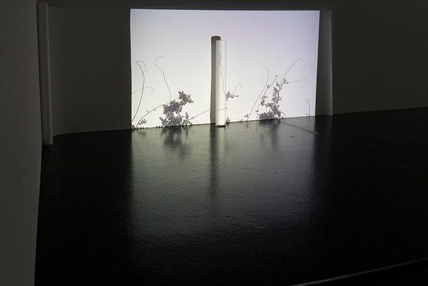 HUA HUA_videoinstallation_ 2018-2019_aargauer kunsthaus aarau