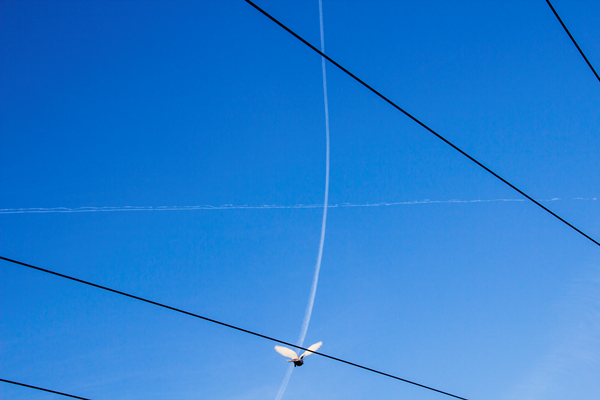 Flights - past and present, 2015. Color print on Hahnemuhle archival paper. 42 x 29.7 cm