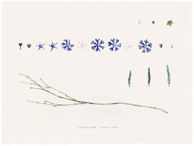 Cornflower made in China, 1998, Aquarell, 56 x 76 cm