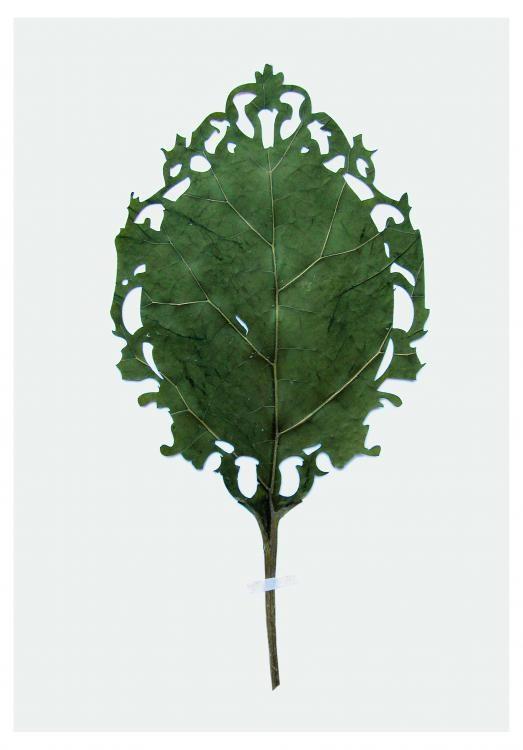 Custmized, 2012, Pflanzenblatt, Lasercut, Edition Auflage 17, 47 x 35 cm