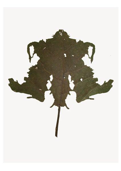 Schläft ein Lied in allen Dingen, A#9, 2009, modifizierte Pflanze, 57 x 42 cm