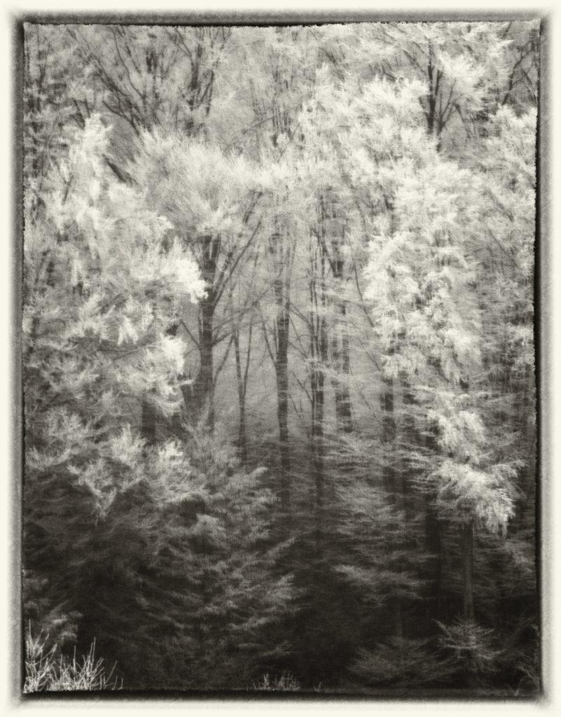 Trees #21, 2017, Fotografie, 123x93cm
